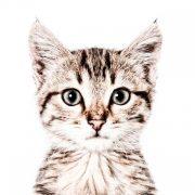 Tapet magnetic Portret pisica mic, GroovyMagnets, 265x63.5cm