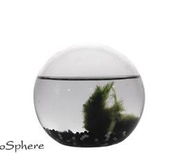 EcoSfera SPHERE JUNGLE - 13 CM